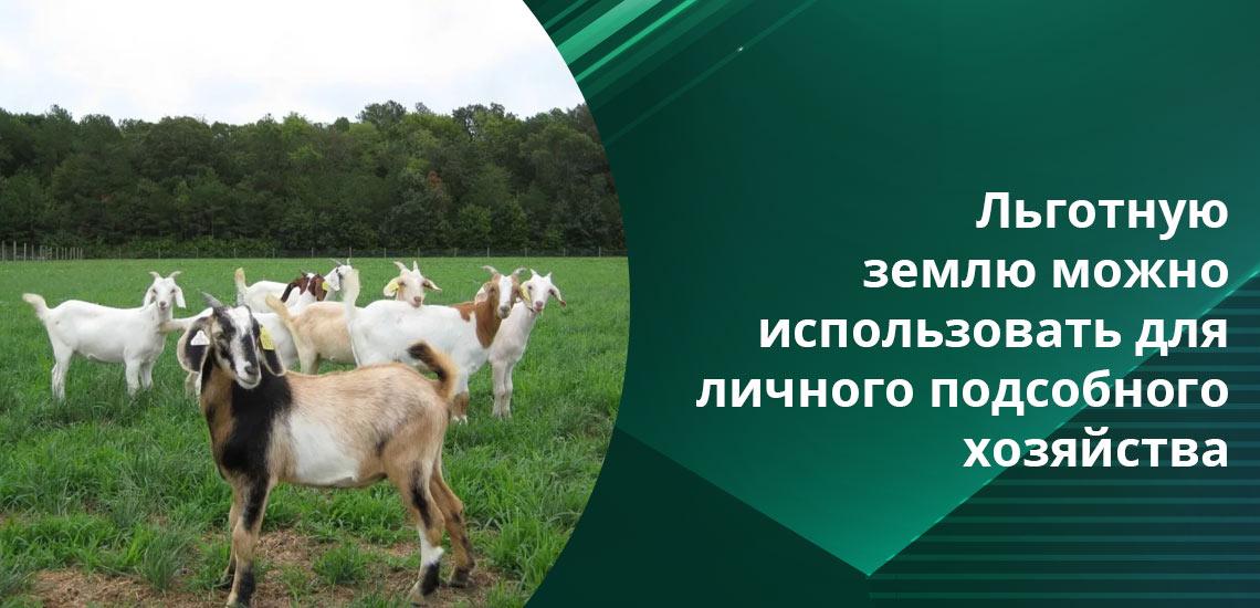 Ведение сельскохозяйственной деятельности - допустимо на участках, которые были бесплатно получены от государства