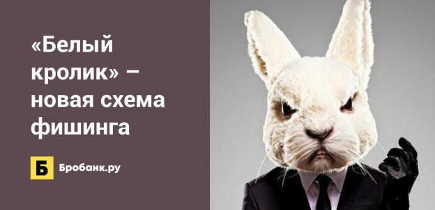 Белый кролик – новая схема фишинга