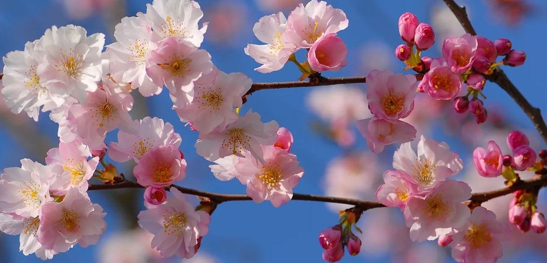 Дни между майскими праздниками будут нерабочими